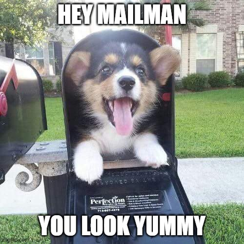 Doggo Suprise |  HEY MAILMAN; YOU LOOK YUMMY | image tagged in cute doggo in mailbox | made w/ Imgflip meme maker