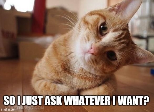 Questions, questions |  SO I JUST ASK WHATEVER I WANT? | image tagged in curious question cat,memes | made w/ Imgflip meme maker