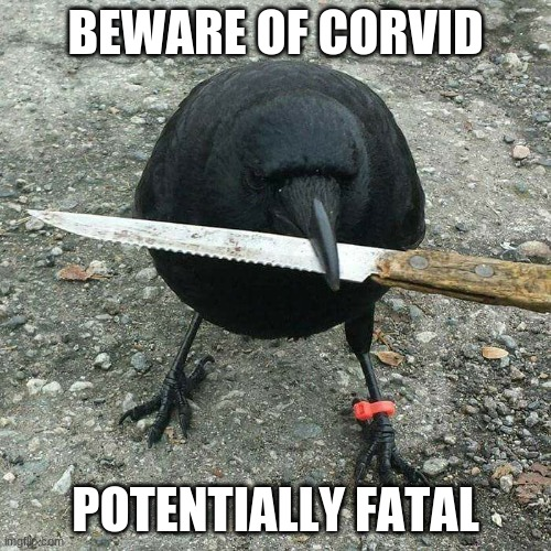 BEWARE OF CORVID POTENTIALLY FATAL | image tagged in deadlybod crow knife | made w/ Imgflip meme maker