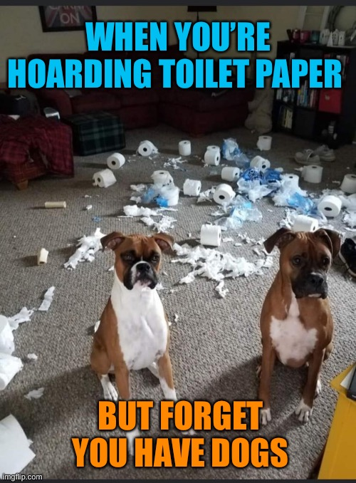 Doggone it! |  WHEN YOU'RE HOARDING TOILET PAPER; BUT FORGET YOU HAVE DOGS | image tagged in coronavirus,toilet paper,hoarders,dogs,we dont care,funny memes | made w/ Imgflip meme maker