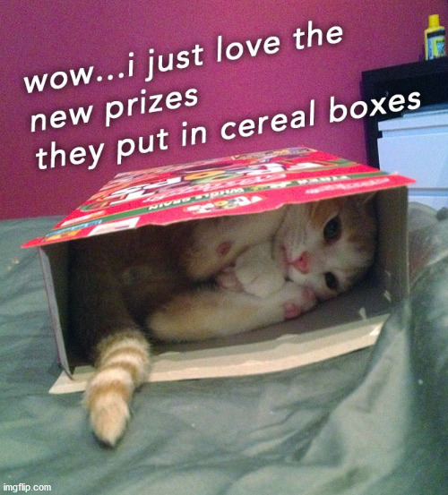 image tagged in cats | made w/ Imgflip meme maker