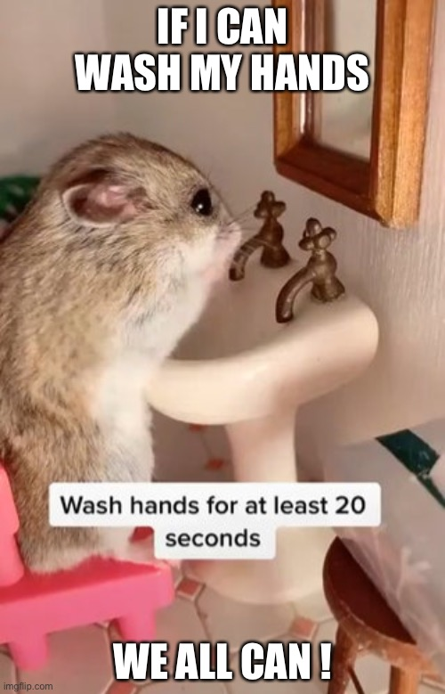 Hamster | IF I CAN WASH MY HANDS WE ALL CAN ! | image tagged in hamster | made w/ Imgflip meme maker