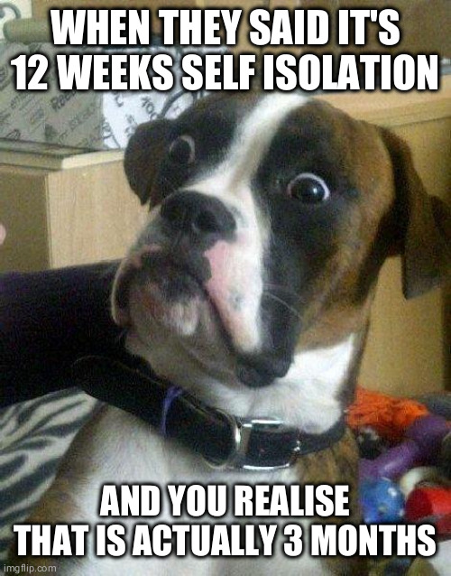 Surprised Dog | WHEN THEY SAID IT'S 12 WEEKS SELF ISOLATION AND YOU REALISE THAT IS ACTUALLY 3 MONTHS | image tagged in surprised dog | made w/ Imgflip meme maker