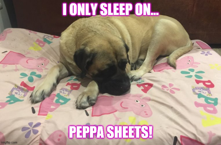 My bed! |  I ONLY SLEEP ON... PEPPA SHEETS! | image tagged in watch dogs,cute dog,bad joke dog,funny dog,funny dogs,bad pun dog | made w/ Imgflip meme maker