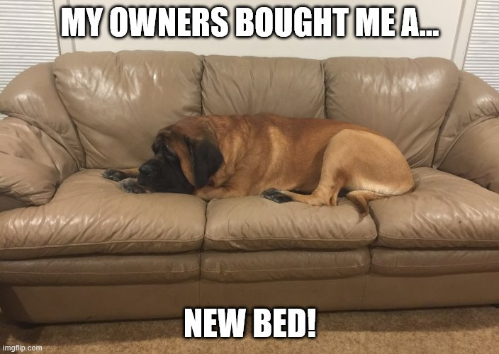 My new bed! |  MY OWNERS BOUGHT ME A... NEW BED! | image tagged in dog,dogs,funny dogs,cute dogs,funny dog,watch dogs | made w/ Imgflip meme maker