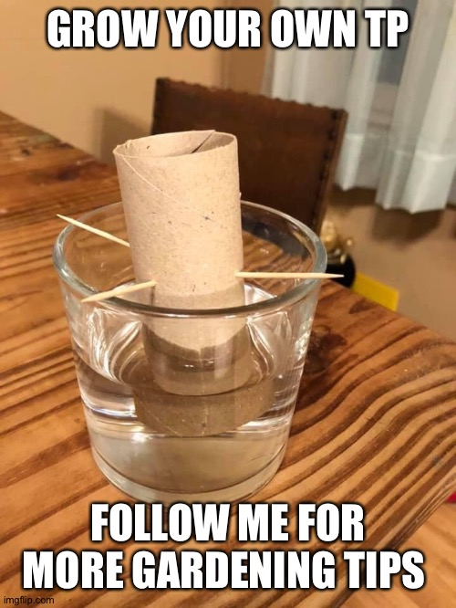 Grow your own TP |  GROW YOUR OWN TP; FOLLOW ME FOR MORE GARDENING TIPS | image tagged in tp,gardening,covid,hoarding,pandemic | made w/ Imgflip meme maker