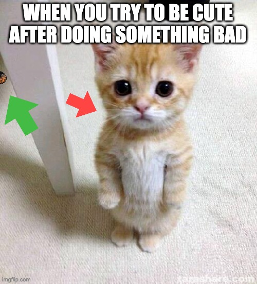 Cute Cat |  WHEN YOU TRY TO BE CUTE AFTER DOING SOMETHING BAD | image tagged in memes,cute cat | made w/ Imgflip meme maker