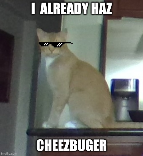 that cat | I  ALREADY HAZ CHEEZBUGER | image tagged in that cat | made w/ Imgflip meme maker