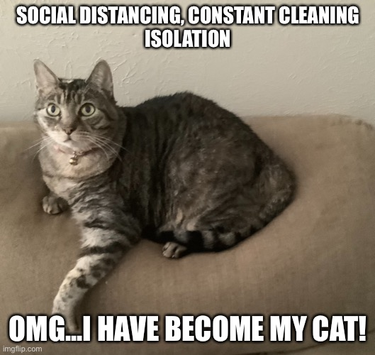 SOCIAL DISTANCING, CONSTANT CLEANING ISOLATION OMG...I HAVE BECOME MY CAT! | image tagged in coronovirus | made w/ Imgflip meme maker
