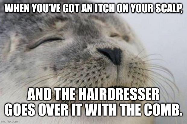 Happy Seal |  WHEN YOU'VE GOT AN ITCH ON YOUR SCALP, AND THE HAIRDRESSER GOES OVER IT WITH THE COMB. | image tagged in happy seal | made w/ Imgflip meme maker