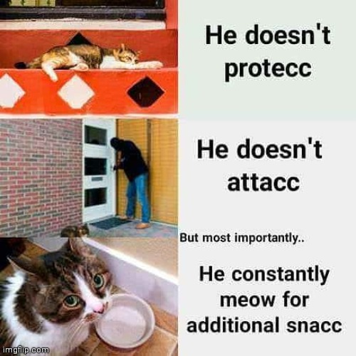 Cats be like. | image tagged in cats,cute,meme,old | made w/ Imgflip meme maker