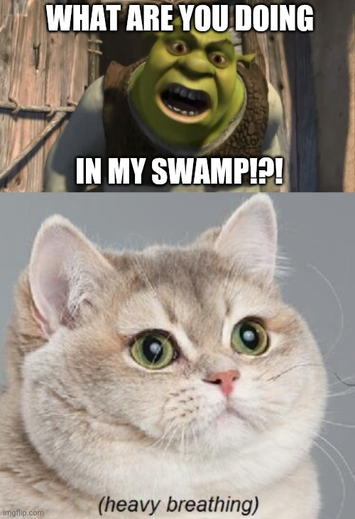 WHAT ARE YOU DOING; IN MY SWAMP!?! | image tagged in memes,heavy breathing cat,shrek what are you doing in my swamp | made w/ Imgflip meme maker