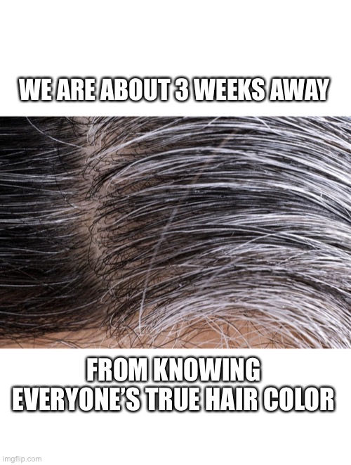 Gray hair roots |  WE ARE ABOUT 3 WEEKS AWAY; FROM KNOWING EVERYONE'S TRUE HAIR COLOR | image tagged in gray hair roots,hair,quarantine,coronavirus,memes,women | made w/ Imgflip meme maker