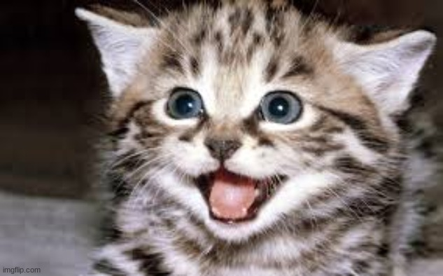 So excited cat | image tagged in so excited cat | made w/ Imgflip meme maker