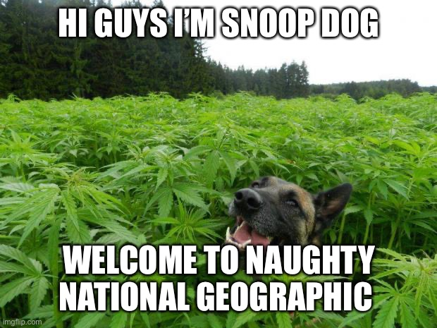 weed policedog |  HI GUYS I'M SNOOP DOG; WELCOME TO NAUGHTY NATIONAL GEOGRAPHIC | image tagged in weed policedog | made w/ Imgflip meme maker