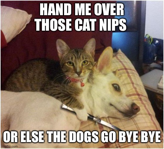 Warning killer cat |  HAND ME OVER THOSE CAT NIPS; OR ELSE THE DOGS GO BYE BYE | image tagged in warning killer cat | made w/ Imgflip meme maker