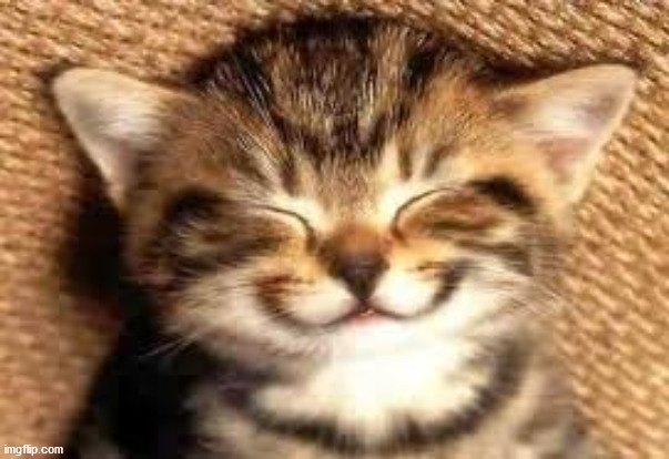 Happy cat | image tagged in happy cat | made w/ Imgflip meme maker