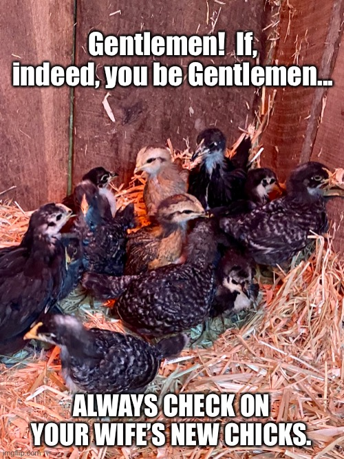 New Chicks |  Gentlemen!  If, indeed, you be Gentlemen... ALWAYS CHECK ON YOUR WIFE'S NEW CHICKS. | image tagged in chickens,men,wife,wives,farming,funny memes | made w/ Imgflip meme maker
