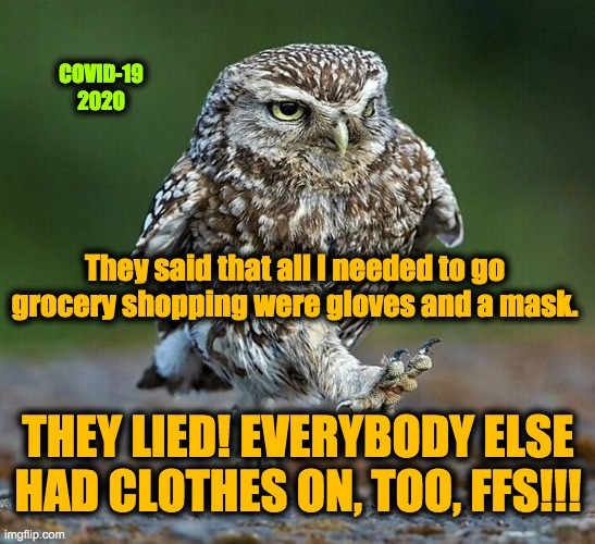 My kid's idea :-) gotta love her! |  COVID-19 2020; They said that all I needed to go grocery shopping were gloves and a mask. THEY LIED! EVERYBODY ELSE HAD CLOTHES ON, TOO, FFS!!! | image tagged in burrowing owl not happy | made w/ Imgflip meme maker