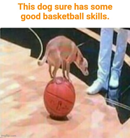 Dog balancing on the basketball |  This dog sure has some good basketball skills. | image tagged in dog,dogs,basketball,basketball meme,sports,funny | made w/ Imgflip meme maker