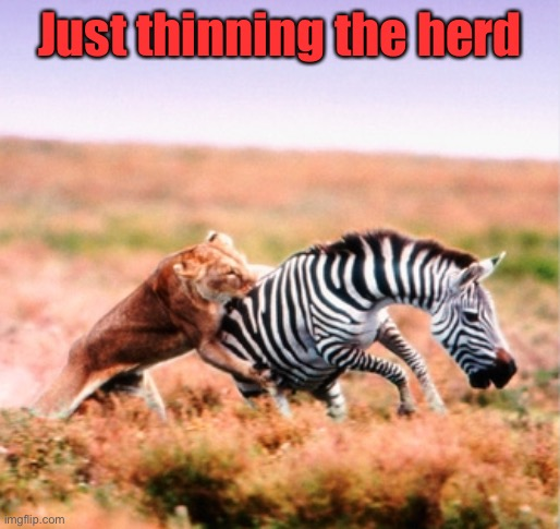 Lion Hunt | Just thinning the herd | image tagged in lion hunt | made w/ Imgflip meme maker