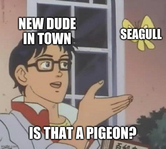 Is This A Pigeon Meme |  NEW DUDE IN TOWN; SEAGULL; IS THAT A PIGEON? | image tagged in memes,is this a pigeon | made w/ Imgflip meme maker