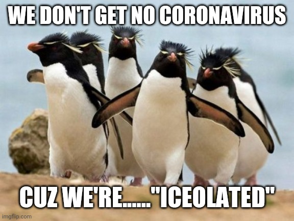 "Funny punny |  WE DON'T GET NO CORONAVIRUS; CUZ WE'RE......""ICEOLATED"" 