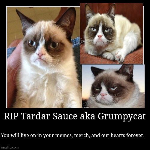 RIP Tardar Sauce aka Grumpycat | You will live on in your memes, merch, and our hearts forever. | image tagged in funny,demotivationals | made w/ Imgflip demotivational maker