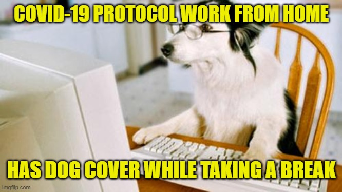 Working from home: My dog covers while I'm raiding the refrigerator and my productivity goes up 20%. Wait, what? |  COVID-19 PROTOCOL WORK FROM HOME; HAS DOG COVER WHILE TAKING A BREAK | image tagged in dog computer,memes,coronavirus,work,social distancing,dog memes | made w/ Imgflip meme maker
