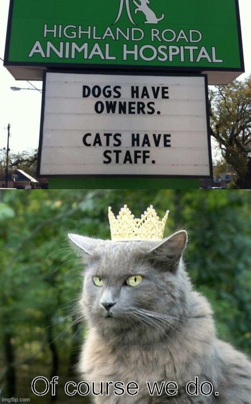 Cats have Staff | Of course we do. | image tagged in cat with crown,cats,staff,animal meme,dogs,funny signs | made w/ Imgflip meme maker