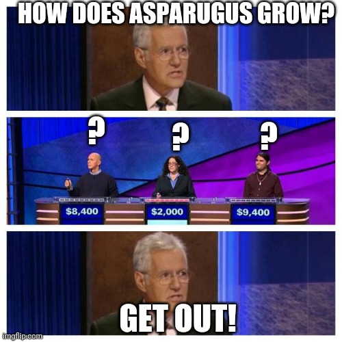 Jeopardy | HOW DOES ASPARUGUS GROW? ? ? ? GET OUT! | image tagged in jeopardy | made w/ Imgflip meme maker