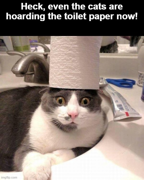 Heck, even the cats are hoarding the toilet paper now! | image tagged in cats,toilet paper,hoarding,hoarders,coronavirus | made w/ Imgflip meme maker