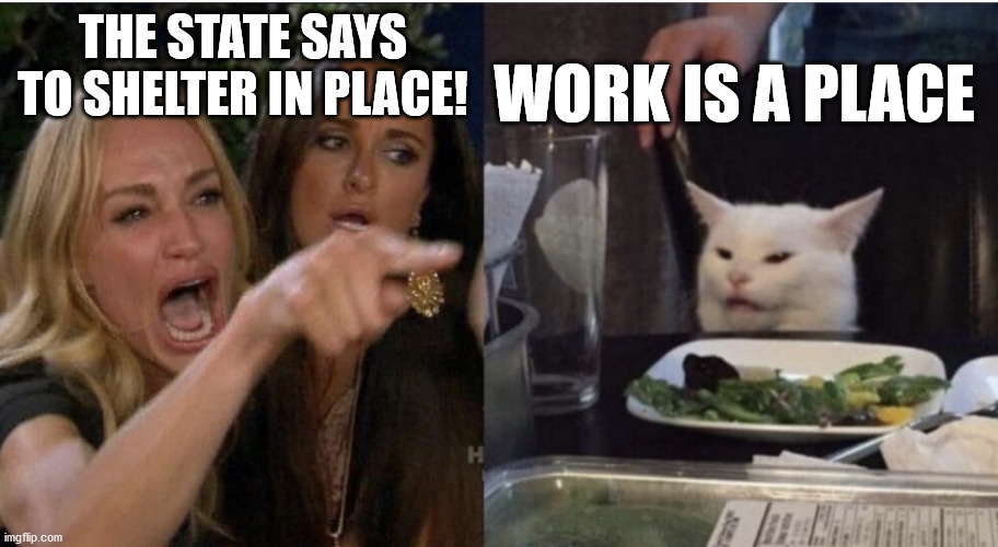Table Cat |  THE STATE SAYS TO SHELTER IN PLACE! WORK IS A PLACE | image tagged in table cat | made w/ Imgflip meme maker