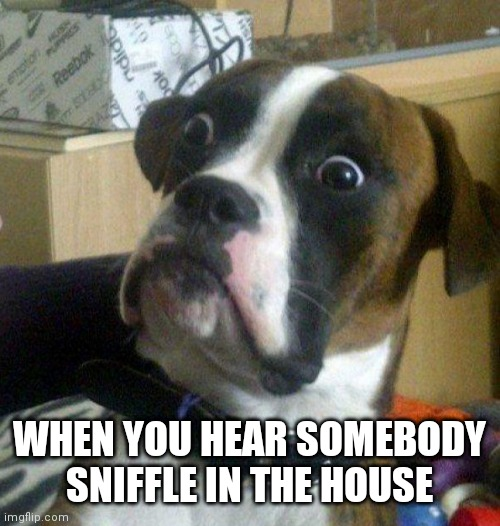 Scared dog |  WHEN YOU HEAR SOMEBODY SNIFFLE IN THE HOUSE | image tagged in scared dog | made w/ Imgflip meme maker
