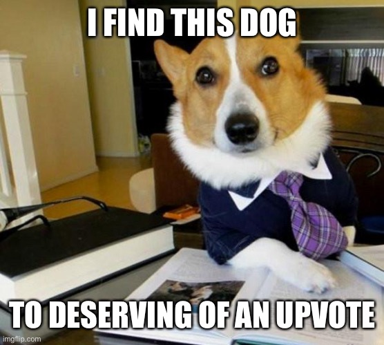 Lawyer Corgi Dog | I FIND THIS DOG TO DESERVING OF AN UPVOTE | image tagged in lawyer corgi dog | made w/ Imgflip meme maker