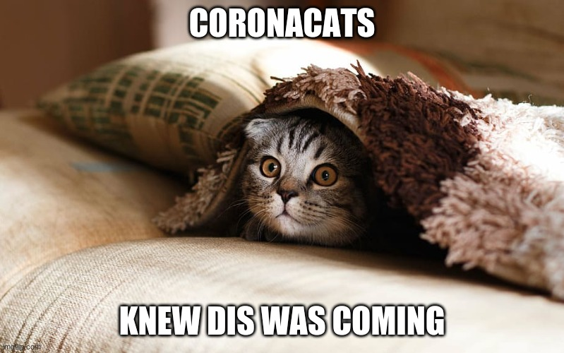 Coronacats |  CORONACATS; KNEW DIS WAS COMING | image tagged in coronavirus,cats,epidemic,corona | made w/ Imgflip meme maker