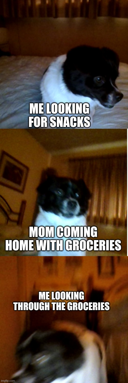 Dogo snack search |  ME LOOKING FOR SNACKS; MOM COMING HOME WITH GROCERIES; ME LOOKING THROUGH THE GROCERIES | image tagged in memes,original meme | made w/ Imgflip meme maker