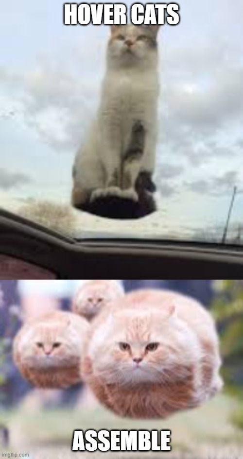 HOVER CATS ASSEMBLE | image tagged in cats | made w/ Imgflip meme maker