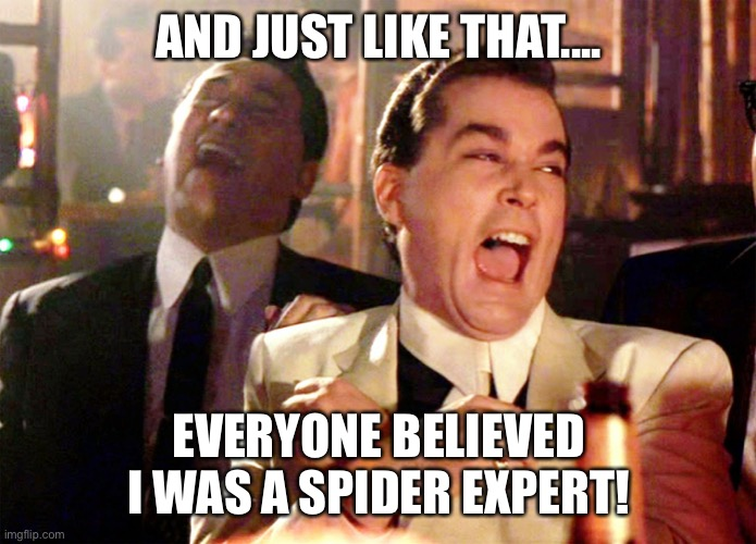 Spider expert | AND JUST LIKE THAT.... EVERYONE BELIEVED I WAS A SPIDER EXPERT! | image tagged in spider | made w/ Imgflip meme maker
