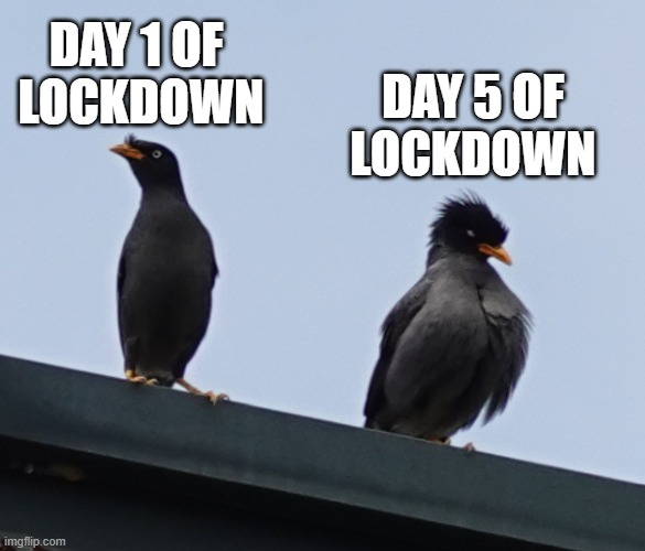 Lockdowns in a nutshell |  DAY 1 OF  LOCKDOWN; DAY 5 OF LOCKDOWN | image tagged in bird,lockdown | made w/ Imgflip meme maker