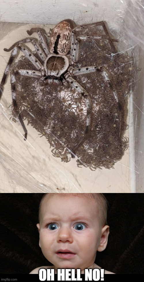 NOPE! |  OH HELL NO! | image tagged in memes,spiders,nope,oh hell no,scared kid | made w/ Imgflip meme maker
