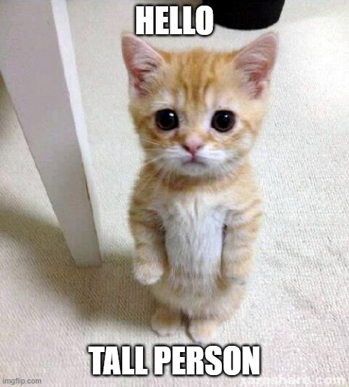 Cute Cat |  HELLO; TALL PERSON | image tagged in memes,cute cat | made w/ Imgflip meme maker
