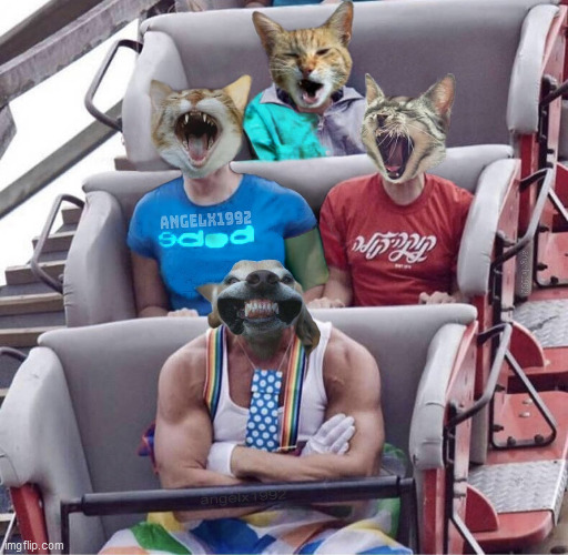 puppy | image tagged in puppy,cat,dog,rollercoaster,amusement park,roller coaster | made w/ Imgflip meme maker