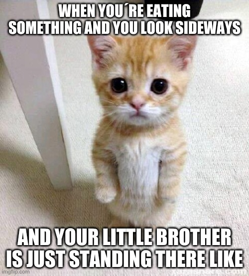 Cute Cat |  WHEN YOU´RE EATING SOMETHING AND YOU LOOK SIDEWAYS; AND YOUR LITTLE BROTHER IS JUST STANDING THERE LIKE | image tagged in memes,cute cat | made w/ Imgflip meme maker