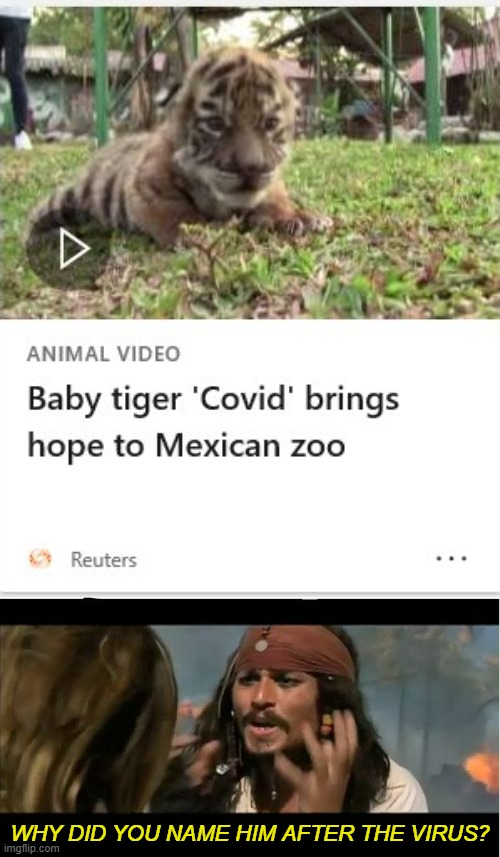 Oh, the irony. |  WHY DID YOU NAME HIM AFTER THE VIRUS? | image tagged in memes,why is the rum gone,irony,coronavirus,tiger,zoo | made w/ Imgflip meme maker
