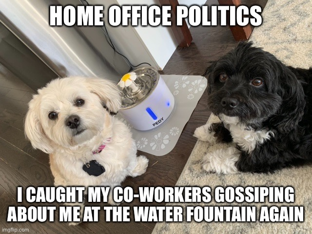 Home office politics |  HOME OFFICE POLITICS; I CAUGHT MY CO-WORKERS GOSSIPING ABOUT ME AT THE WATER FOUNTAIN AGAIN | image tagged in pets,coworkers,workplace,gossip | made w/ Imgflip meme maker