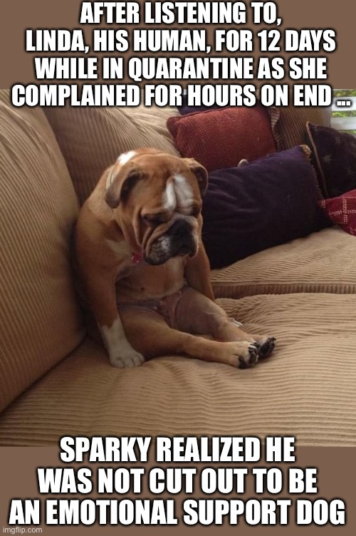 bulldogsad |  AFTER LISTENING TO, LINDA, HIS HUMAN, FOR 12 DAYS WHILE IN QUARANTINE AS SHE COMPLAINED FOR HOURS ON END ... SPARKY REALIZED HE WAS NOT CUT OUT TO BE AN EMOTIONAL SUPPORT DOG | image tagged in bulldogsad | made w/ Imgflip meme maker