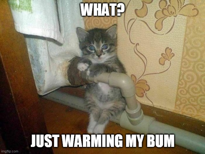 WARM BUTT |  WHAT? JUST WARMING MY BUM | image tagged in kitten,cats,funny cats,cute cat | made w/ Imgflip meme maker