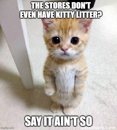 Cute Cat Meme |  THE STORES DON'T EVEN HAVE KITTY LITTER? SAY IT AIN'T SO | image tagged in memes,cute cat | made w/ Imgflip meme maker