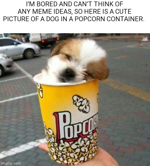 Pupcorn |  I'M BORED AND CAN'T THINK OF ANY MEME IDEAS, SO HERE IS A CUTE PICTURE OF A DOG IN A POPCORN CONTAINER. | image tagged in memes,dogs,popcorn,bored,funny | made w/ Imgflip meme maker